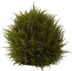 nearly natural Cedar Decorative Sphere
