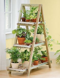 new plant stand for seedlings on the porch.  I could use an old ladder and use old boards to make this stand Chabby Chic