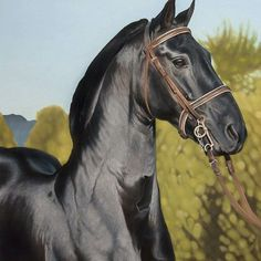 Finished oil portrait of SA Vlaam stallion 'Adoons' presented at the Moorreesburg Agri Show on Saturday and handed to owner Herman Burger. It was great to be able to see Adoons strutting his stuff again in the show arena. What a horse!! #oilsoncanvas #oilpainting #painting #art #animalart #realisticanimalart #horses #stallion #vlaamhorse #blackhorsesofinstagram #equine #equineartist #horseart #michelleequiartstudio