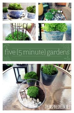 Have five minutes? You can create a cute little container garden! Check out these adorable ideas for tiny gardens you can make in a crate, pot or terrarium!