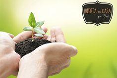 8 plantas fáciles de cultivar perfectas para principiantes - IMujer