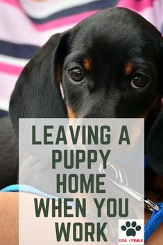 new puppy You might worry about leaving your dog at home, but this a struggle every dog owner goes through. Although it can be difficult at first, managing time spent away at work and raisin Puppies Tips, Dogs And Puppies, Puppies Stuff, Dog Stuff, Chow Puppies, Doggies, Puppy Care, Pet Care, Cesar Milan