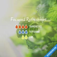 Focused Refreshmint - Essential Oil Diffuser Blend Essential Oil Diffuser Blends, Essential Oils, Peppermint, Perfume, Floral, Mint, Flowers, Fragrance, Essential Oil Uses