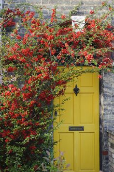 A yellow door has no trouble standing out beneath piles of climbing greens. RELATED: 5 Fast-Climbing Vines for Your Garden