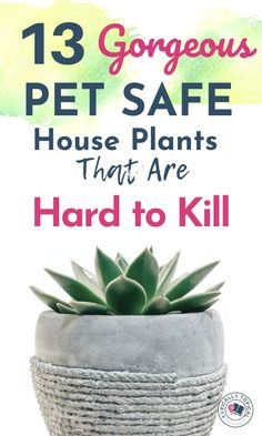 Want to buy more plants for your home but also want to keep your pets safe? Here are 13 gorgeous indoor house plants that are pet friendly and non toxic to cats, dogs and horses. These indoor plants are ASPCA approved. Indoor plants that are pet safe