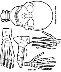 Make a paper skeleton to label bones school pinterest for Skeleton template to cut out