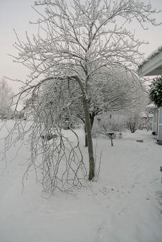 lumiukon puutarhassa