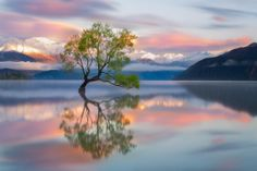 Lone Tree Of Lake Wanaka - New Zealand Photo:  This Photo was uploaded by staffpicks. Find other Lone Tree Of Lake Wanaka - New Zealand pictures and phot...