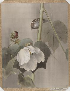 Flowers and Birds Okada Baison (Japanese, ) Period: Meiji period (1868–1912) Culture: Japan Medium: Album leaf; ink and color on silk Dimensions: 14 3/4 x 11 1/2 in. (37.5 x 29.2 cm) Classification: Painting
