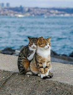 Cute Funny Animals, Cute Baby Animals, Animals And Pets, Funny Cats, Beautiful Cats, Animals Beautiful, Kittens Cutest, Cats And Kittens, Gato Gif