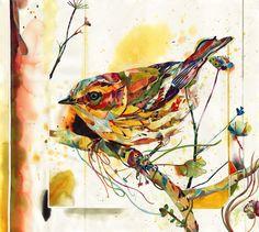 Travis Black bird