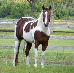 """My beautiful horse """"Princess Adora"""""""