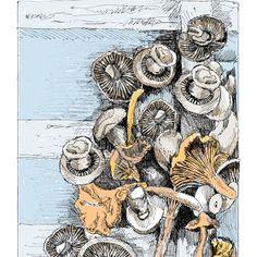 Wild Mushrooms - May van Milligan -- love this site!