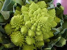 """Romanesco Broccoli-  """"The texture is more tender than cauliflower, making it suited to raw use as crudités. Romanesco broccoli has a milder flavor, more creamy and nutty, and less bitter, than conventional broccoli or cauliflower."""" I love the pattern of it...it actually is a fractal / Fibonacci number design!"""