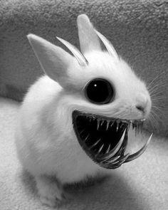 Dating een Bunny ketel