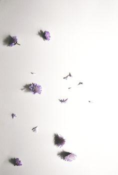 Flipped magazine | Herbarium | March-April 2016 Photography | Set design : Mimika Michopoulou