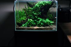 http://aquaticmag.com/freshwater/23-easy-to-grow-low-light-plants-for-your-aquarium/