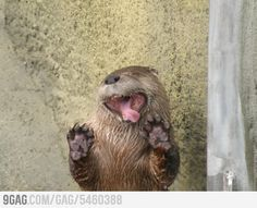 Derp Otter