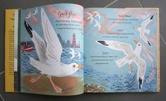 Mark Hearld's illustrations for A First Book of Nature