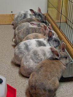 lovely colored bunnies..!