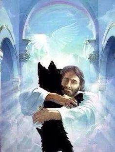 I know your with Jesus Jakey, All dogs go to heaven. All Dogs, I Love Dogs, Puppy Love, Dogs And Puppies, Cute Dogs, Doggies, Animals And Pets, Cute Animals, Pet Loss Grief