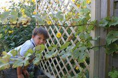 Versteckspiel hinter einem unserer Rankgitter. Viel Platz für Natur.. .
