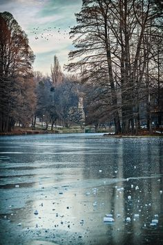 The Romanescu Park with the lake frozen, cold but beautiful