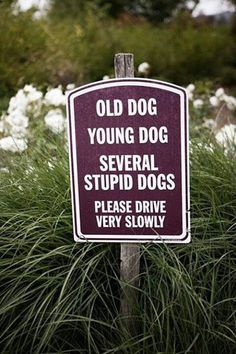 old dog, young dog, several stupid dogs