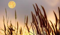 #Пълнолуние в #Стрелец - http://sanovnik.bg/n4-59695 #Хороскопи #Зодии #Предсказания