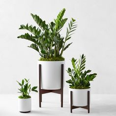 Indoor Trees, Potted Trees, Potted Plants, Cactus Plants, Hanging Baskets, Hanging Planters, Planter Pots, Wall Planters, Concrete Planters