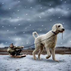 Social Pets – Juji the Giant Dog
