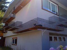 Evin dışındaki kedi yolu