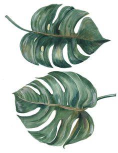 tropical Split Leaves Philodendron plant botanic watercolor painting on white background Botanical Art, Botanical Illustration, Leaf Wall Art, Painted Leaves, Art Mural, Texture Painting, Watercolor Paintings, Plants Watercolor, Watercolour