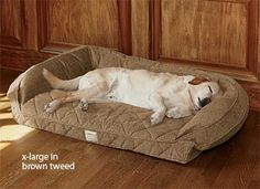 Deep Dish Dog Bed with Memory Foam - great for old dogs