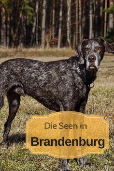 Berlin, Brandenburg, Berlin Tipp, Hund, animal, See, Unternehmung,