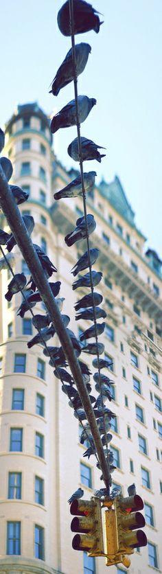 Bluebirds on a wire