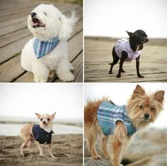 Classy Dog Fashion Shoot.  from the Rover Boutique.  http://www.etsy.com/shop/TheRoverBoutique