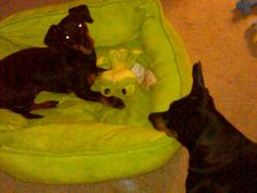 Tucker stole Paxtons froggy...Paxton is scheming to get it back...lol