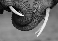 Image result for elephant tatoveringer