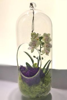 Orchid Plant Terrarium Glass Globe 12 Inch Gorgeous and beautiful! Perfect for homes and offices. A must-have piece♡♡♡ This live orchid terrarium