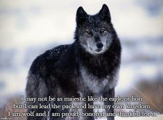 Wolf Pack Quotes, Wolf Qoutes, Wolf Spirit, Spirit Animal, Got Busted, Alpha Wolf, Wolf Stuff, Mommy Quotes, Epic Quotes