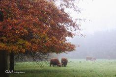 foggy morning | ochtendmist Foggy Morning, Scottish Highlands, Autumn Leaves, Fall Leaves, Highlands, Autumn Leaf Color