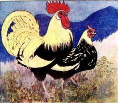 Galo, ilustração de Artus Scheiner (1863-1938)  —-