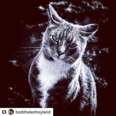 Meow. #reiseliv #reisetips #reiseblogger #reiseråd  #Repost @bodilhelenhoyland with @repostapp  #mycatmacho#total_cats#bns_cats#loves_united_cats#cats_of_instworld#animals#catloversclub#cat_of_world#cat_of_the_day#kings_alltags#kings_cats#taramagasin#ukebladethjemmet#catchclick_bnw#total_bnw#detail_super_pics