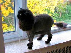 Стрижка котов (фото): забота о здоровье и красоте животного Смотри больше http://kot-pes.com/strizhka-kotov-foto/