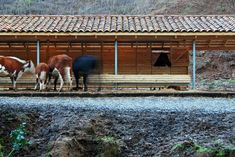Establo,© Maurizio Angelini