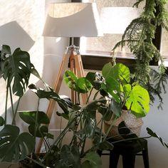 """Sandra on Instagram: """"Laissez la nature entrer dans votre maison.  Avec la tendance Jungle, mettez dans plantes vertes dans tous les recoins de la maison.…"""" Nature, Plants, Instagram, Green Plants, Walk In, Home, Naturaleza, Plant, Nature Illustration"""