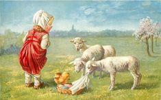 Girl Looking Down At Lambs
