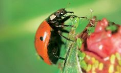 Garden Pest Control entails the regulation and control of pests, which is a type of species that are damaging to plants. Garden pests diminish the quality and Slugs In Garden, Garden Insects, Garden Pests, Garden Gnomes, Best Pest Control, Pest Control Services, Bug Control, Organic Insecticide, Gardens