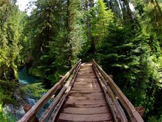 5 Amazing Places to Camp in Olympic National Park rawling out of your tent in Graves Creek, the first thing you see is the majestic Quinault River flowing strongly just a few short feet away. Olympic National Park Hikes, National Parks, Best Campgrounds, Senior Trip, Camping Places, Day Hike, State Parks, Wa State, Places To See